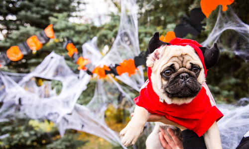 A dog wearing a Halloween costume