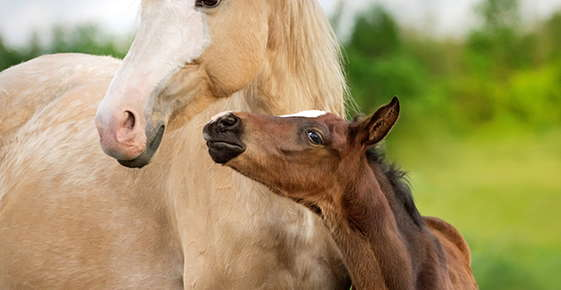 Image of mother horse and baby.