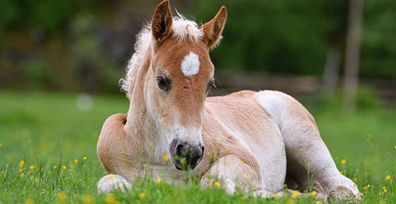 Image of a foal.