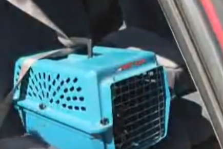 Image of a seatbelt strap securing a pet carrier in a car.