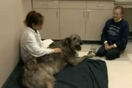Image of a veterinarian and a woman sitting on the floor with a dog.