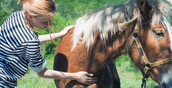 Image of woman petting horse.