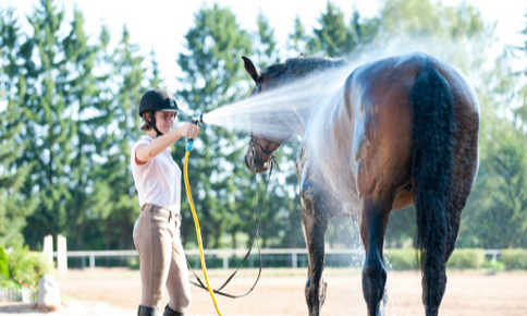 Young woman hosing off horse in the summertime