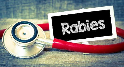 Image of stethoscope and a sign that says rabies.