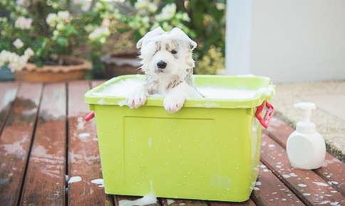 dog grooming and bath