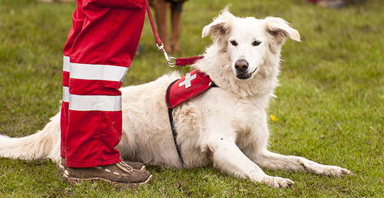 Image of a rescue dog.