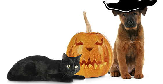 Image of pets dressed up for Halloween.