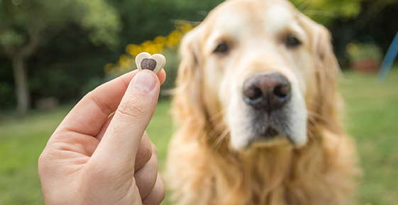 Image of a dog getting a treat.