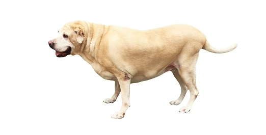 Image of dog standing.