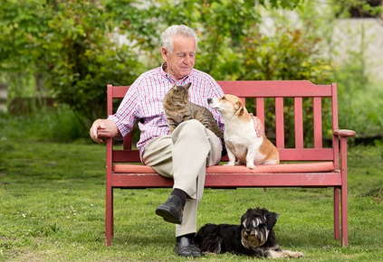 Image of an elderly man sitting on a bench with a cat, dog, and a second dog laying by his feet.