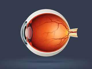 Vector image of an eyeball.
