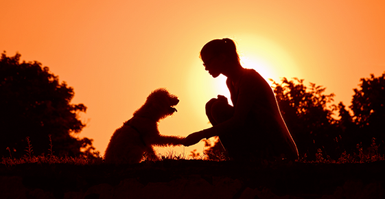 Silhouette of a woman and her dog against the sunset.