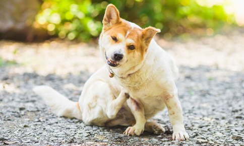 image of a dog scratching his chest with hindleg