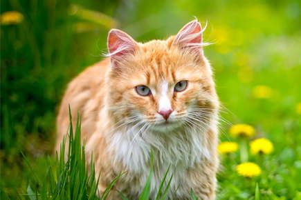 image of a cat in grassy field.