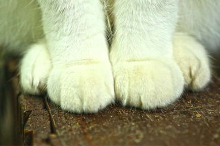 image of cat feet and legs.