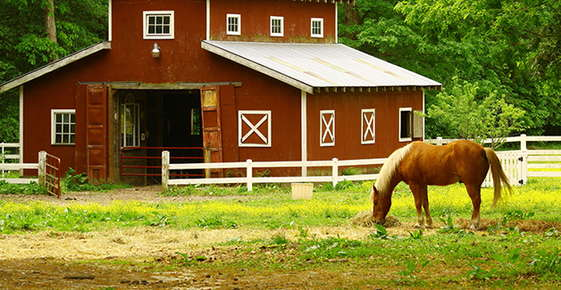 Image of horse grazing in front of barn.