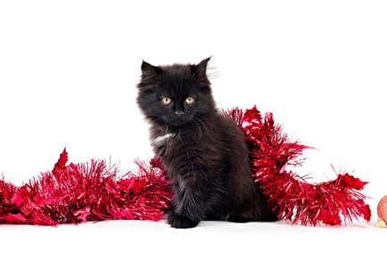 image of a cat with holiday decorations.