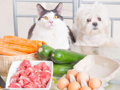 image of cat and dog looking at food