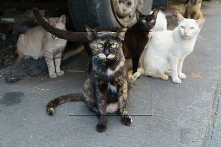 image of a group of cats.