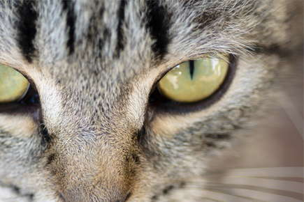 image of a cat eye.