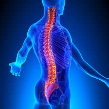 illustration of a highlighted spine