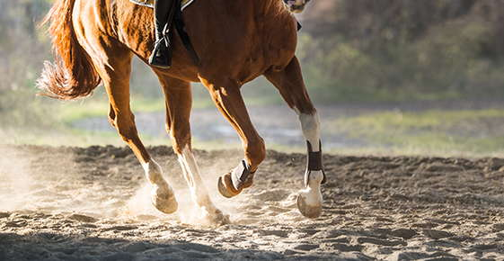 Image of galloping horse legs.