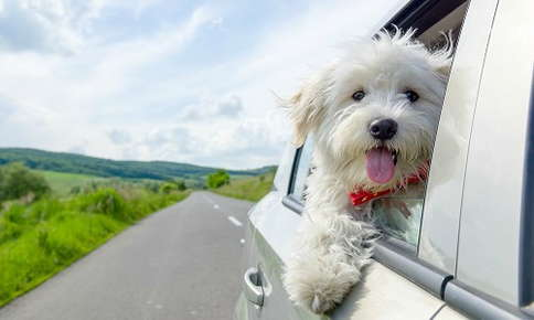 Dog riding in car down open road