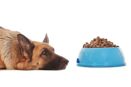 Image of a German Shepherd looking sick next to a bowl of dog food.