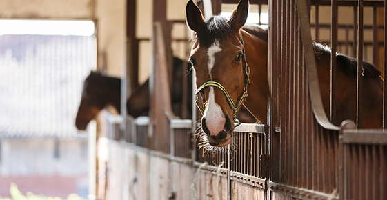 Image of a horse in a stall.