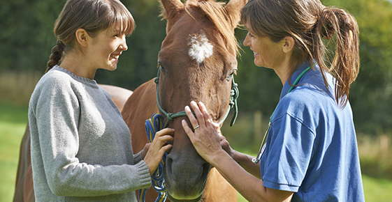 Image of a vet, horse and owner.