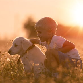A small boy and a labrador puppy in a sunny field