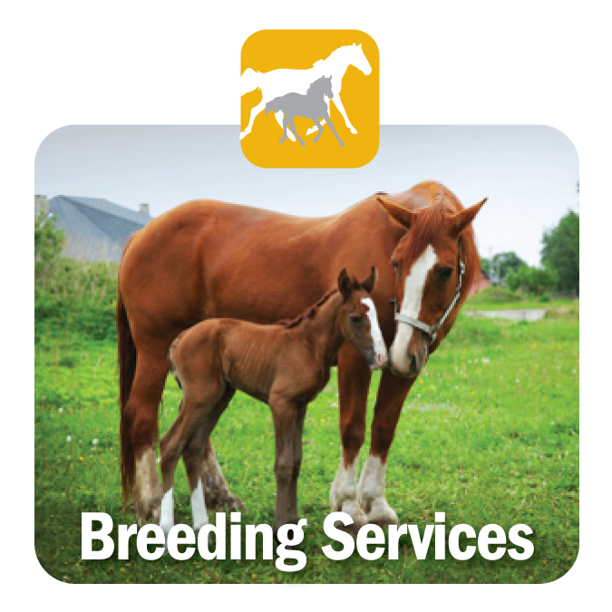Breeding Services