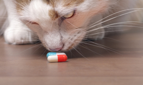 Cat sniffing prescription pills