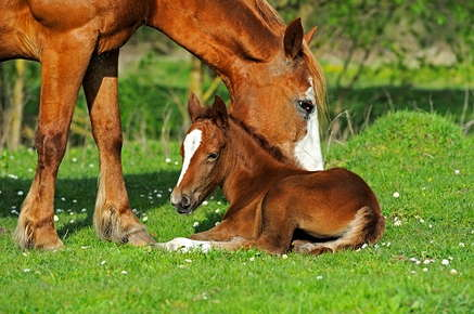 Image of foal and mama horse.