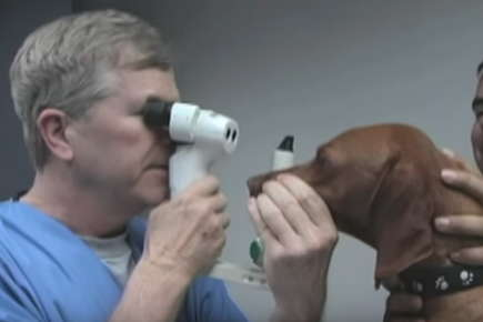 Image of veterinarian checking dog's eyesight.