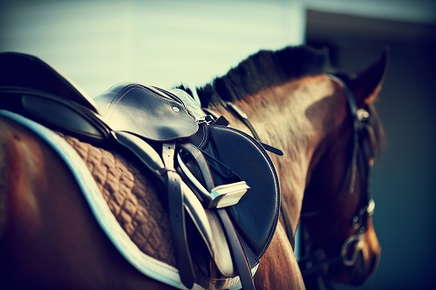 Image of a horse saddle.