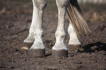 Image of horse hooves.