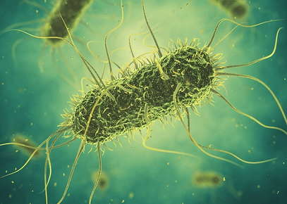 Image of salmonella.