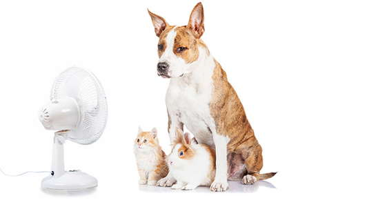 Image of pets in front of a fan.