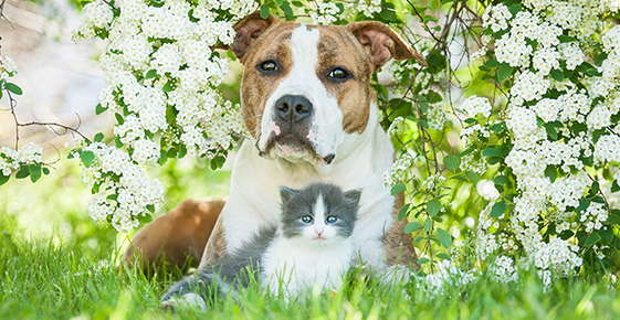 Image of a dog and cat in spring flowers.