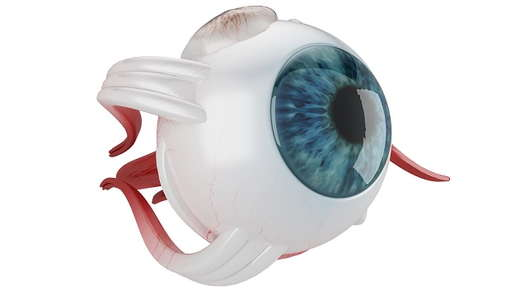 Image of an eyeball.