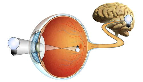 Cartoon image of an eyeball connected to a brain.