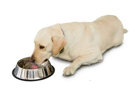 Image of puppy eating out of a dog bowl.