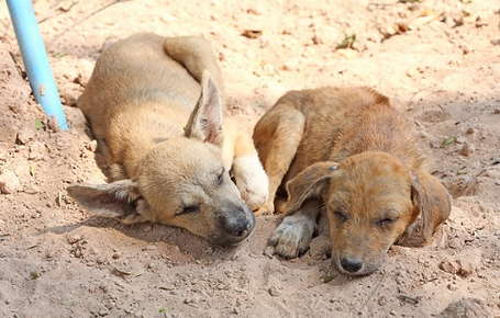 Image of two puppies laying in the sand.