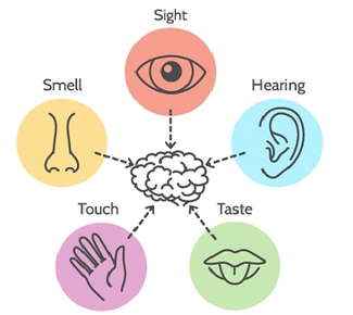 Image of the five different senses connecting to a brain.
