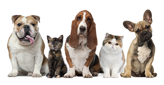 Dogs and cats pose in a line.
