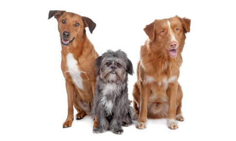 image of dogs.