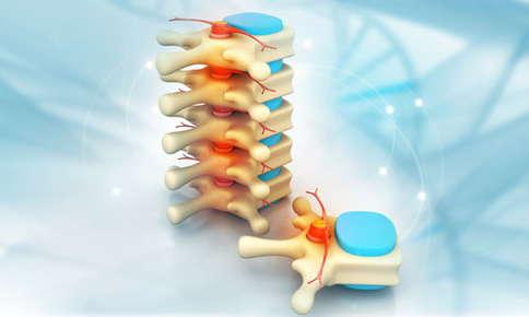 3d spine image
