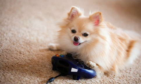 Small dog sitting next to video game controller