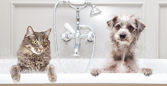 A cat and a dog in a bathtub.
